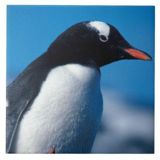 Antarctica, Sub-Antarctic Islands, South Tile