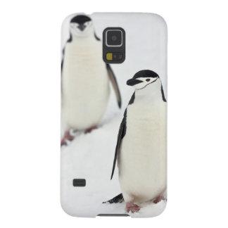 Antarcticus del Pygoscelis de los pingüinos de Chi Carcasa De Galaxy S5