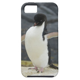 Antártico Funda Para iPhone 5 Tough