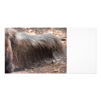 anteater animal tail closeup ant eater photo card