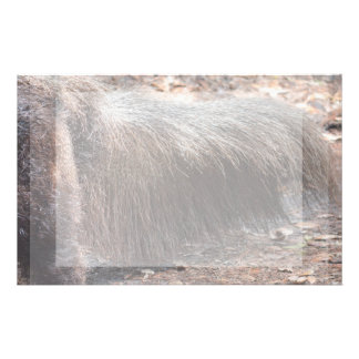 anteater animal tail closeup ant eater stationery