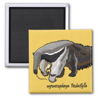 anteater gigante imán cuadrado
