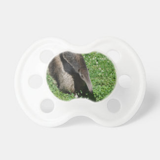 Anteater in Field Pacifiers