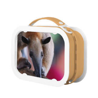 Anteater Lunch Box