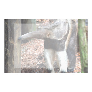 anteater nose raised wild animal image picture stationery