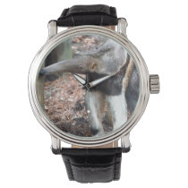 anteater nose raised wild animal image picture wristwatch