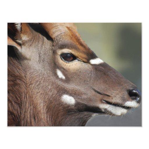 Antelope close up custom invites