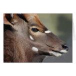 Antelope close up greeting cards