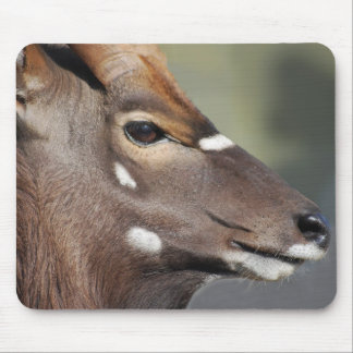 Antelope close up mouse pad