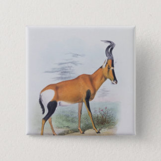 Antelope, from 'The Book of Antelopes', Button