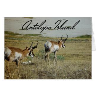 Antelope Island Card
