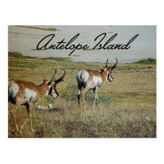 Antelope Island Postcard