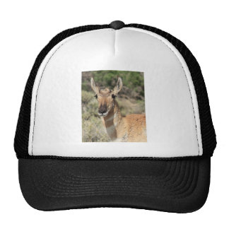 Antelope Portrait Trucker Hat
