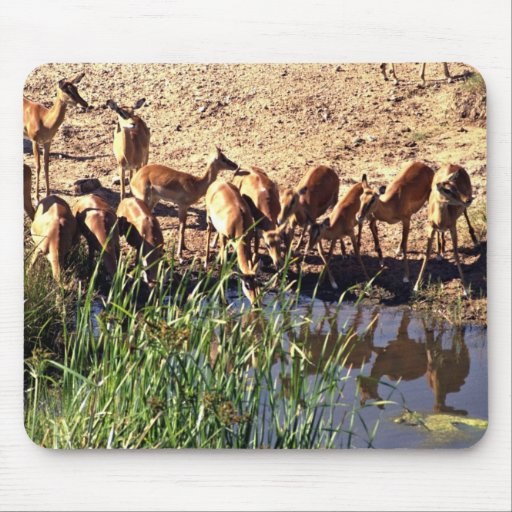 Antelopes at a watering place mouse pad