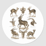 Antelopes Classic Round Sticker
