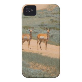 Antelopes crossing iPhone 4 Case-Mate case