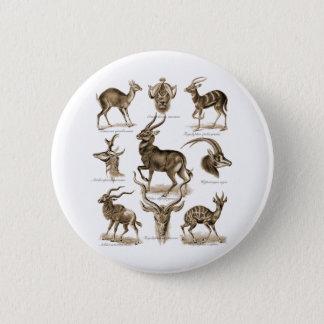 Antelopes Pinback Button