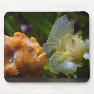 Antennarius commerson & Taenianotus triacanthus Mouse Pad