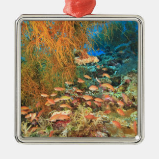 Anthias fish and black coral, Wetar Island, Metal Ornament