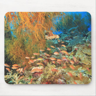 Anthias fish and black coral, Wetar Island, Mouse Pad