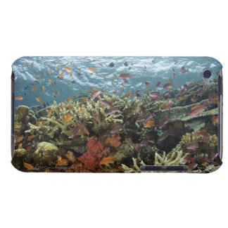 Anthias (Pseudanthias sp.) Fairy Basslets Case-Mate iPod Touch Case