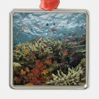 Anthias (Pseudanthias sp.) Fairy Basslets Metal Ornament