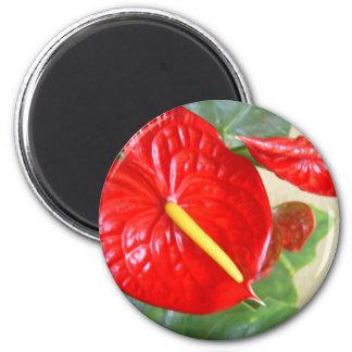 Anthurium 2 Inch Round Magnet