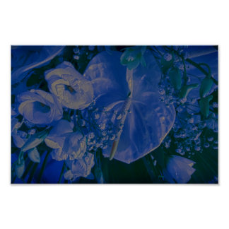 anthurium and roses poster