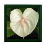 Anthurium blanco cajas de recuerdo
