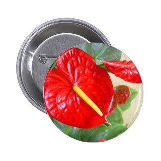 Anthurium Button
