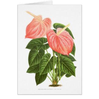 Anthurium Cards