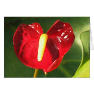 Anthurium Flower Notecard
