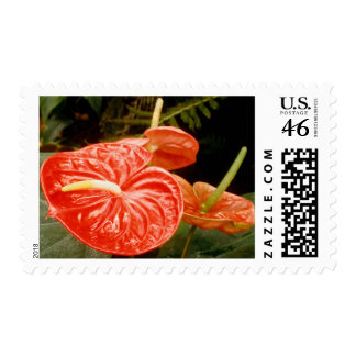 Anthurium Lily Stamps