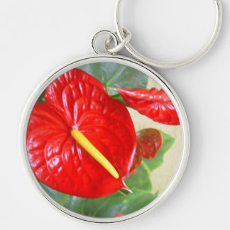 Anthurium Llavero Redondo Plateado