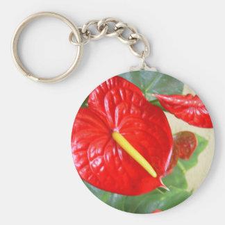 Anthurium Llavero Redondo Tipo Pin