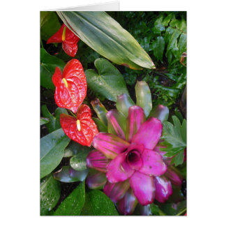 Anthuriums and Bromeliad Card