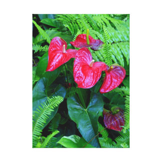 Anthuriums and Ferns Canvas Print