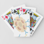Antibodies Binding to Mast Cell Bicycle Playing Cards