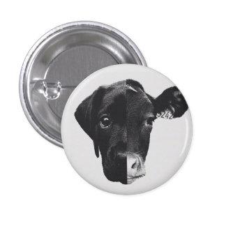 Antiespecismo Pinback Button