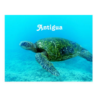 Antigua Hawk Billed Turtle Postcard
