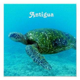 Antigua Hawk Billed Turtle Poster