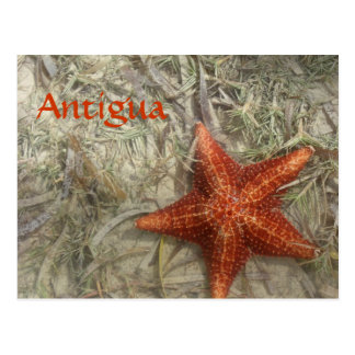 Antigua Starfish Postcard