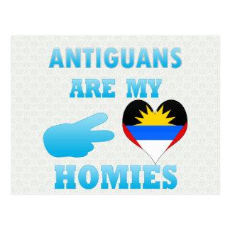 Antiguans are my Homies Postcard
