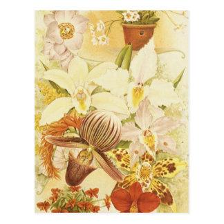 Antigüedad de los flores de la flor de la orquídea postal
