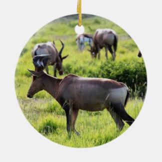 Antílope africano en safari en Suráfrica Adorno Para Reyes