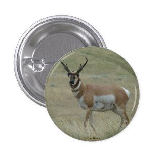 Antílope de A0033 Pronghorn Pin Redondo De 1 Pulgada