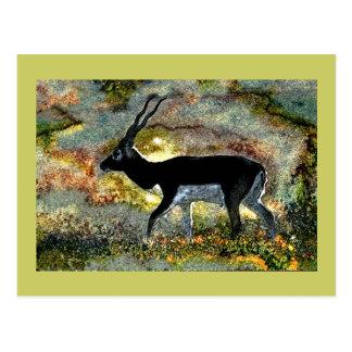 Antílope de Blackbuck de Junglewalk.com Tarjeta Postal