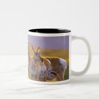 Antílope de Pronghorn en Montana Tazas De Café