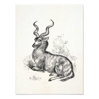 Antílope rizado del Gazelle del cuerno del vintage Cojinete