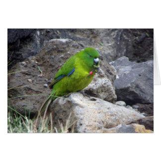 Antipodes Island Parakeet Cards